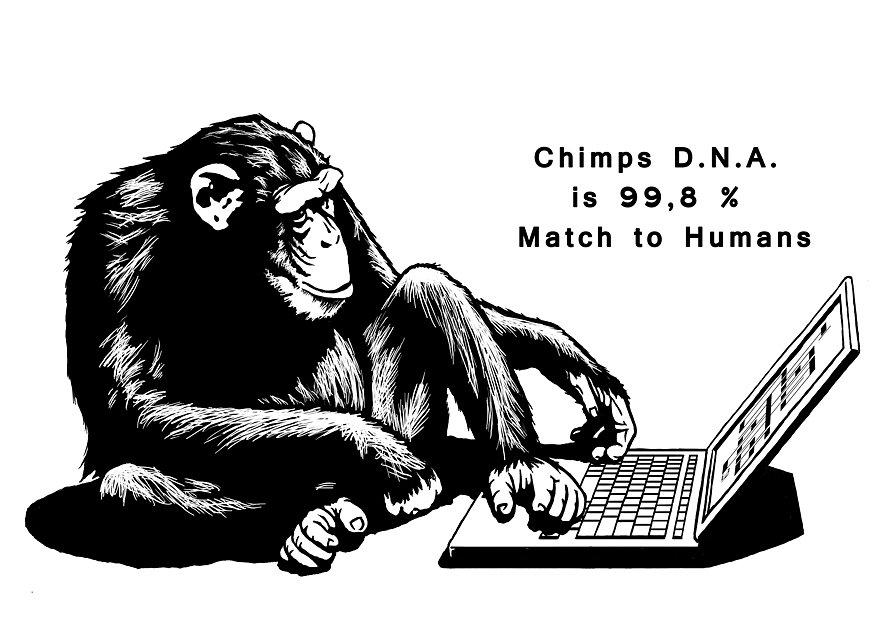 computer-chimp.jpg